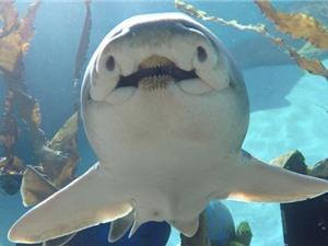 Cá mập cũng có cá tính như con người