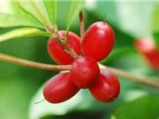 10 loại trái cây ngon nhất thế giới