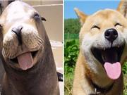 Những khoảnh khắc giống nhau siêu ngộ nghĩnh của chó và hải cẩu