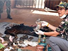 Đền thờ hổ nổi tiếng dính nghi án buôn bán động vật hoang dã