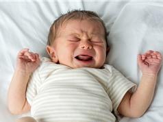Loài người thông minh hơn nhờ trẻ sơ sinh?
