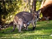 Khám phá khó tin về sinh vật chỉ có ở Australia