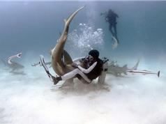 Cho cá mập cắn để dạy cách tự giải thoát khi bị tấn công