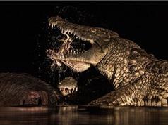 Hãi hùng cá sấu tử thần mở tiệc trên xác con mồi