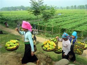 Chuyển giao tiến bộ KHCN thúc đẩy phát triển nông thôn, miền núi
