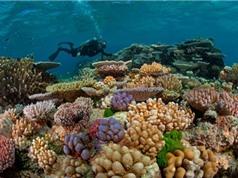 Hàng trăm hécta rạn san hô ở biển Côn Đảo bị tẩy trắng do El Nino