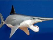 Những loài động vật đáng sợ hơn khủng long thời tiền sử