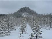 Những rừng cây đẹp như trong truyền thuyết
