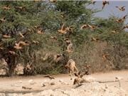 Chó rừng tung tuyệt kỹ phi thân săn gà cát