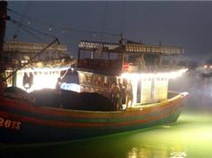 Tăng năng suất đánh bắt cá bằng đèn LED