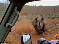 Cận cảnh tê giác điên cuồng tấn công xe của du khách