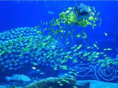 Chiêm ngưỡng 10 thủy cung ấn tượng nhất thế giới