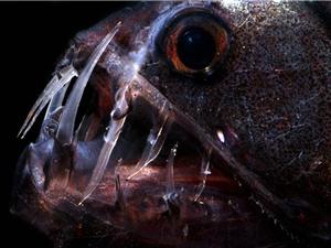 Chùm ảnh những thủy quái phát sáng đáng sợ nhất đại dương