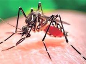 Thử nghiệm thành công vaccine chống virus Zika trên động vật