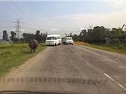 Tê giác điên cuồng tấn công ô tô, loạt tài xế hoảng loạn