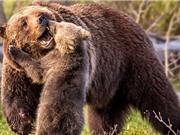 """Chùm ảnh gấu con tặng mẹ cả """"cơn mưa nụ hôn"""" cực yêu"""