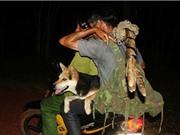 Kỳ thú săn đêm xuyên đại ngàn: Khắc tinh của rừng sâu