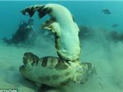 Từ chối giao phối, cá mập cái suýt bị bạn tình giết