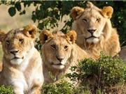 Những anh hùng động vật cứu rỗi con người