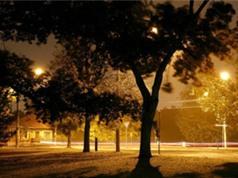 Ô nhiễm ánh sáng có thể khiến mùa xuân đến sớm 1 tuần