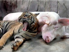 """Những đôi bạn """"lạ đời"""" trong thế giới động vật"""