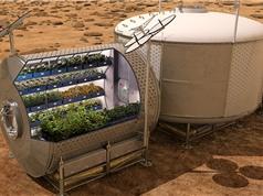 Rau, quả trồng trên sao Hỏa là thực phẩm sạch