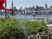 Trồng rau trong đô thị kém an toàn vì ô nhiễm