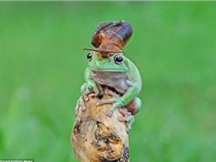 Ngộ nghĩnh ốc sên cưỡi đầu ếch xanh ngắm cảnh