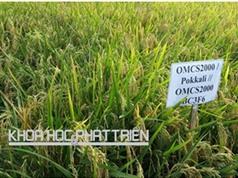Thiệt hại nông nghiệp do hạn mặn ở ĐBSCL: Tìm giải pháp thích ứng cho 18 triệu dân