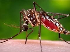 """""""Điểm danh"""" 10 loài côn trùng nguy hiểm nhất thế giới"""