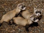 10 động vật có nguy cơ tuyệt chủng cao nhất