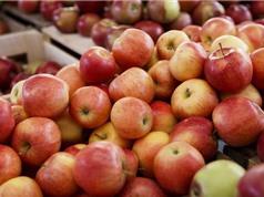 Cách cực hay kiểm tra xem táo có bị phun hóa chất độc hại hay không