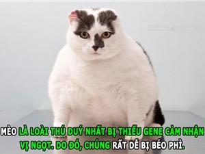 ĐỘC - LẠ: Mèo dễ béo phì, ổi nhiều vitamin C hơn cam