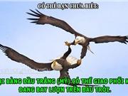 ĐỘC-LẠ: Đại bàng giao phối trên không, người thông minh nói dối rất giỏi