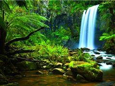 Mất 300 năm để thống kê thực vật ở Amazon