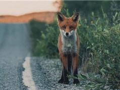Chùm ảnh động vật tuyệt đẹp trong rừng Scandinavia