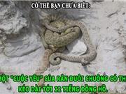 """ĐỘC-LẠ: Cuộc yêu của rắn đuôi chuông dài 22 tiếng, """"đá sát sinh"""" có thật"""