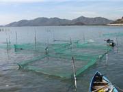 Xây dựng chỉ dẫn địa lý ốc hương Khánh Hòa; Cách triển khai nhiệm vụ sản phẩm quốc gia