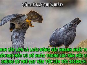 ĐỘC-LẠ: Chim cắt đạt tốc độ 322 km/h, mái tóc nặng 60kg