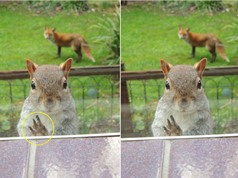 Khoảnh khắc cầu xin sự giúp đỡ của chú sóc nhỏ
