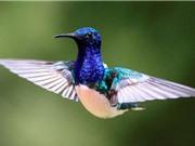 Những bức ảnh động vật ấn tượng nhất tuần qua
