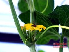 Huấn luyện ong thụ phấn trong nhà lưới; Thiên thạch mạnh ngang ba tỷ tấn thuốc nổ ngày càng gần Trái Đất