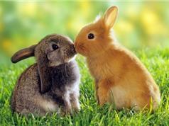Chùm ảnh siêu đáng yêu về động vật nhỏ
