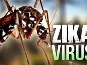 Chủng virus zika ở Việt Nam có nguy cơ mắc chứng đầu nhỏ thấp