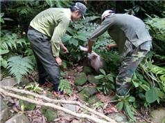 Thả động vật rừng về tự nhiên tại Phong Nha - Kẻ Bàng