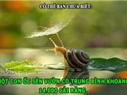 ĐỘC-LẠ: Ốc sên có 14.000 cái răng, sự đáng sợ của loài ruồi