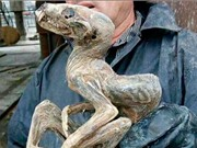 """Nga phát hiện sinh vật """"quái dị"""" trong mỏ kim cương"""