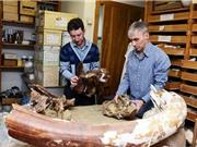 Có thể xây nhà máy điện mặt trời ở Cam Ranh; Nga tìm thấy loài khủng long mới