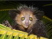 """10 động vật có bề ngoài xấu xí nhưng """"lành tính"""" nhất thế giới"""