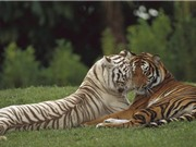 """Những khoảnh khắc trao tình yêu """"ngọt ngào"""" trong thế giới động vật"""